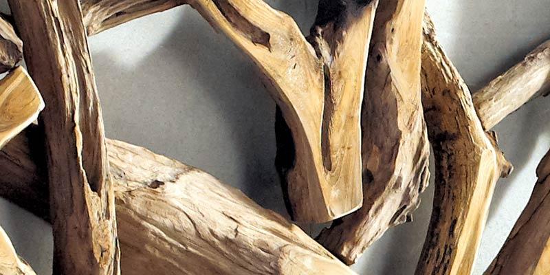 Racine de teck, l'arbre est abattu, la racine est travaillée